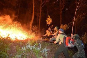 'Giặc lửa' thiêu rụi và xóa sổ hàng trăm hecta rừng phòng hộ