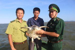 Quảng Ninh: Thả cá thể vích quý hiếm về với biển