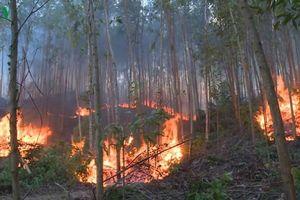 Hàng trăm người căng mình dập lửa rừng ở Quảng Ngãi