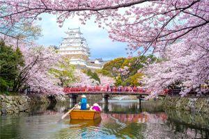 7 công ty du lịch Việt Nam bị Đại sứ quán Nhật Bản hủy bỏ tư cách xin visa đoàn