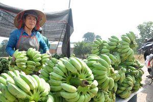 Hà Nội phấn đấu có hơn 1.000ha cây ăn quả ứng dụng công nghệ cao