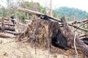 Gia Lai: Ban Quản lý Rừng phòng hộ Đức Cơ để mất hơn 9 ngàn héc-ta rừng