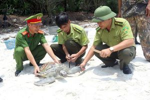 Quảng Ninh: Thả 3 cá thể vích về biển