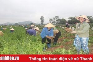 Xuất khẩu rau quả còn nhiều tiềm năng