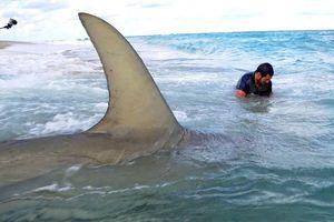Cá mập bơi sát chân người tắm biển gây sốc ở Mỹ