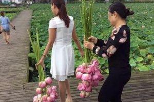 Ngỡ ngàng cảnh hàng trăm du khách Trung Quốc leo rào hái trộm hoa