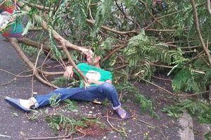 Hà Nội: Gió bão số 2 làm cây xanh đổ trúng 2 người đi đường