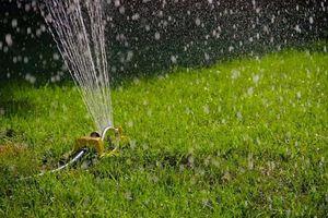 Ghi nhớ ngay 'bí kíp' này là bạn sẽ có thảm cỏ xanh rì suốt cả năm