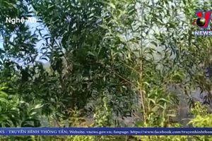 Khởi tố và bắt tạm giam đối tượng gây ra vụ cháy rừng tại Hà Tĩnh