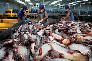 Xuất khẩu cá tra: Đón đầu cơ hội từ EVFTA