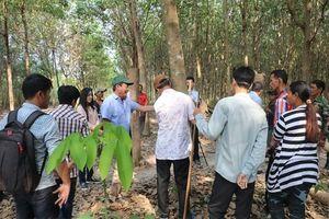 Ngành cao-su Việt Nam tạo việc làm cho hơn 15.000 người lao động Campuchia