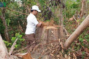 Thu hồi hơn 930 triệu đồng sai phạm tại rừng phòng hộ Bắc Ia Grai