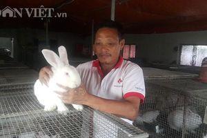 Trên nuôi thỏ, dưới nuôi giun, lãi 20 triệu mỗi tháng