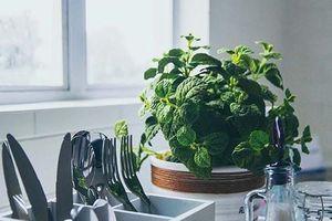 Loại cây trồng tốt nhất cho từng căn phòng trong nhà bạn