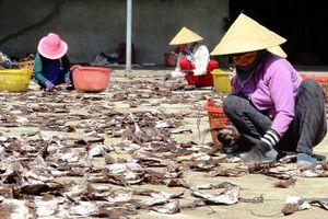 1.000 tấn mực khô 'ế' vì Trung Quốc ngừng thu mua tiểu ngạch