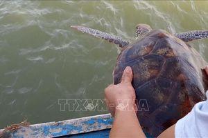 Giải cứu cá thể rùa biển quý hiếm khỏi rác thải nhựa