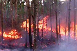 Hai vụ cháy rừng trong ngày ở Phú Yên