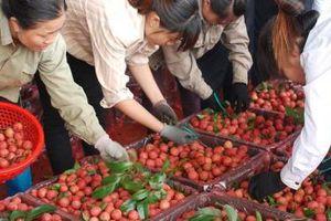 Kết thúc mùa vải thiều, Bắc Giang thu 6.365 tỷ đồng