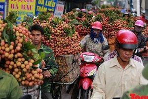 Bắc Giang 'gặt hái' hơn 6.000 tỷ đồng từ quả vải