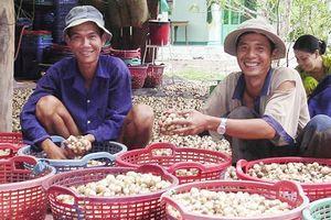 Đẩy mạnh sản xuất và xuất khẩu nấm ở ĐBSCL