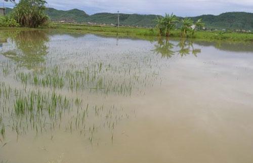 Nghệ An: Ngã xuống ruộng lúa ngập nước sau trận mưa lớn, bé 22 tháng tuổi tử vong