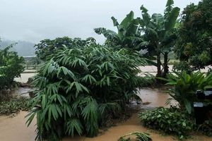 Sơn La: Mưa lũ gây thiệt hại lớn tại huyện biên giới Sốp Cộp