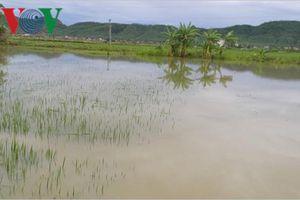 Ngã xuống ruộng lúa ngập nước, bé 22 tháng tuổi tử vong thương tâm