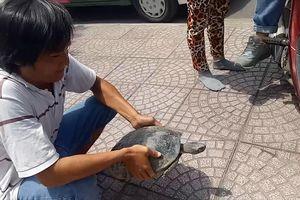 Lần theo đường dây bán rùa trái phép tại trung tâm Sài Gòn