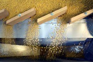 Trung Quốc chưa chắc giữ lời hứa tăng mua nông sản Mỹ