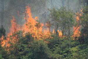 Hà Tĩnh: Gần 268 ha rừng bị cháy