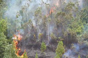 Rừng thông ở Đà Nẵng bốc cháy ngùn ngụt