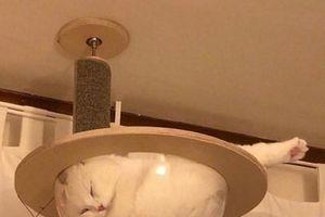 Khi mèo cưng 'phô diễn' thành sinh vật yêu nhất hành tinh