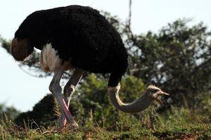 Bật mí những 'kỷ lục' siêu dị trong thế giới động vật