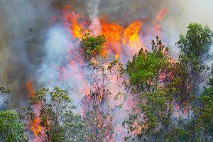 Cháy rừng ở Đà Nẵng được khống chế sau gần 3 giờ bốc lửa