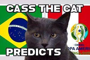Xem Mèo tiên tri 'phán' kết quả chung kết Brazil vs Peru