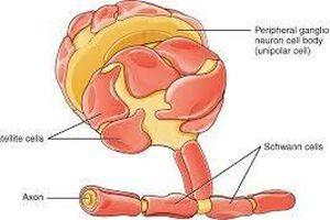 Mỹ phát triển phương pháp mới điều trị các chứng bệnh thần kinh