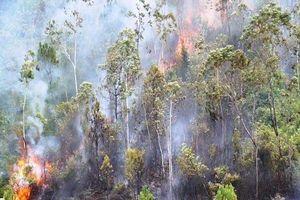 Cháy rừng ở Đà Nẵng thiêu rụi 2 ha rừng tự nhiên