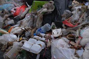 Việt Nam quyết tâm 'tẩy chay' đồ nhựa dùng một lần