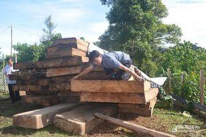 Nghệ An: Giúp huyện giáp biên của nước bạn Lào phát hiện, thu giữ hơn 20m3 gỗ lậu quý hiếm