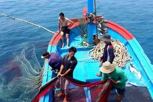 Ngư dân Việt cần làm gì để EU gỡ 'thẻ vàng' thủy sản?