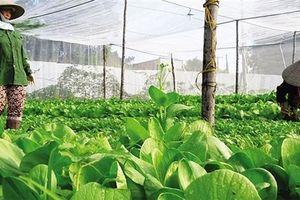 Phát huy mũi nhọn khởi nghiệp nông nghiệp Việt Nam