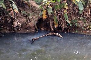 Nguồn nước sinh hoạt của TP Hải Phòng ô nhiễm trầm trọng