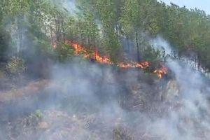 Cháy rừng tại Hà Tĩnh, lại lo đường dây điện hạ thế