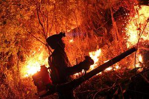 Hơn 500 người xuyên đêm vật lộn với lửa rừng cháy ngùn ngụt