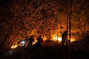 Hà Tĩnh: Nhiều ha rừng ở Hương Sơn lại tan hoang vì 'giặc' lửa