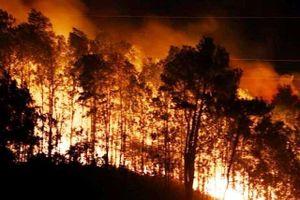 Rừng thông tại núi Nầm bùng cháy trở lại