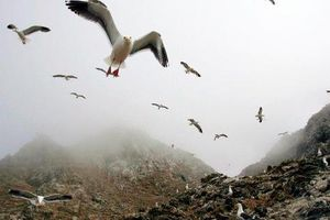 Mỹ cân nhắc 'rửa' quần đảo Farallon bằng 1,5 tấn thuốc chuột