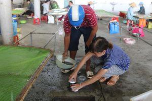 Cá nuôi lồng bè chết hàng loạt, dân kéo đến cơ sở chế biến hải sản 'lụi'