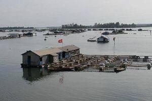 Tránh lặp lại vụ cá chết trên sông La Ngà