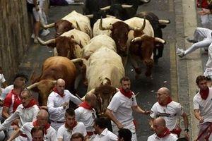 Cảnh bò tót rượt đuổi đoàn người trong Lễ hội San Fermin